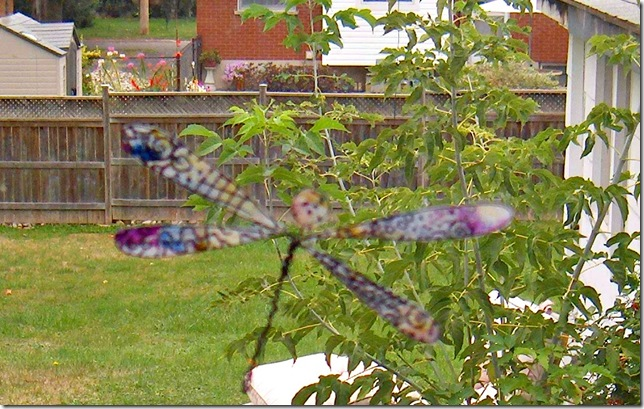dragonfly4pic