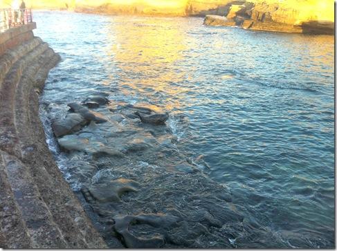 Seals_LaJolla_California