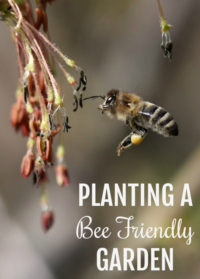 Planting a Bee Friendly Garden