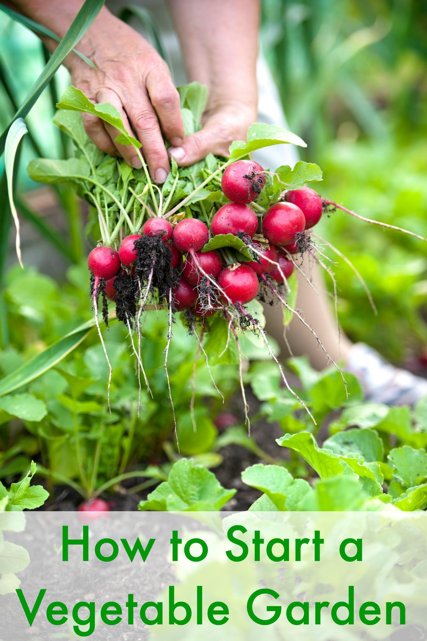 how to start a vegetable garden