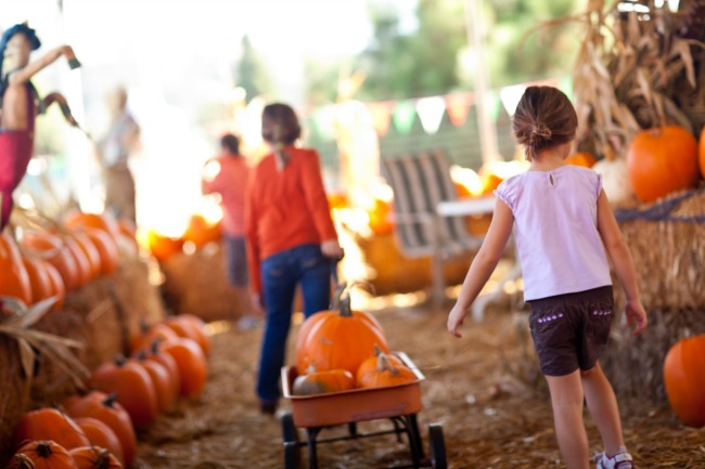 choosing pumpkins for carving