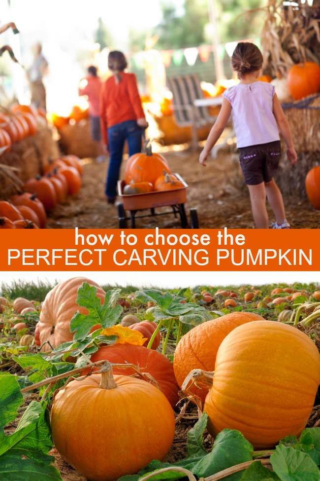 how to choose the perfect carving pumpkin
