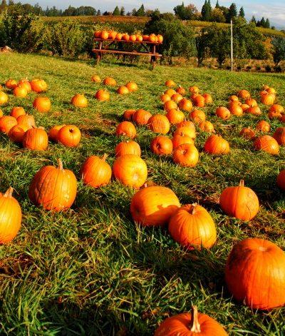 london ontario pumpkin patches
